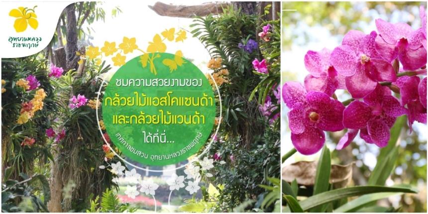 FloraFestival2017PhotoOrchidéesMontage