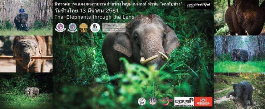 ThaiElephantDay2018ThaiElephantsThroughTheLensCover