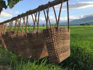 Phayao rizières Marco Rugo