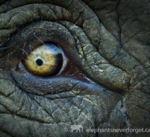 WorldElephantDay2018PhotoWorldElephantDayrecadrée